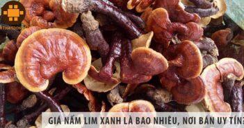 Giá nấm lim rừng tự nhiên là bao nhiêu, nơi bán uy tín?